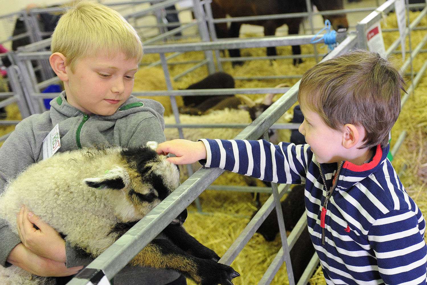 Kids with lambs at Springtime Live