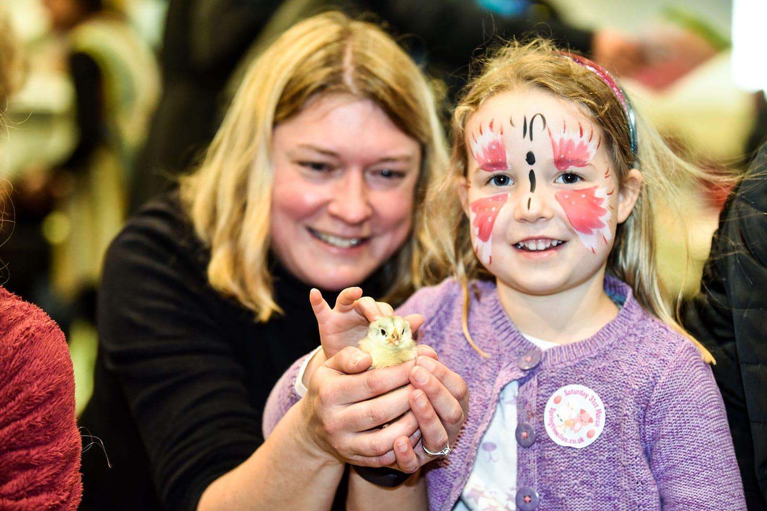 Hatching chicks at Springtime Live